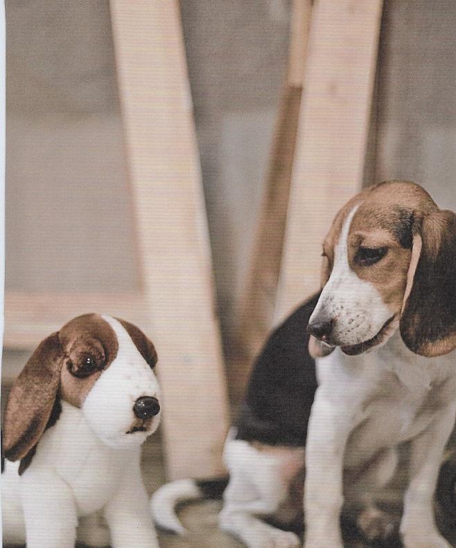 Pluchen dieren als educatie kopen opleiding dierenverzorger en socialisatie honden in asiel