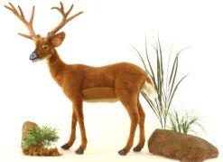 Mooie XL Roodbruine Witstaarthert decoratie  165 cm kopen