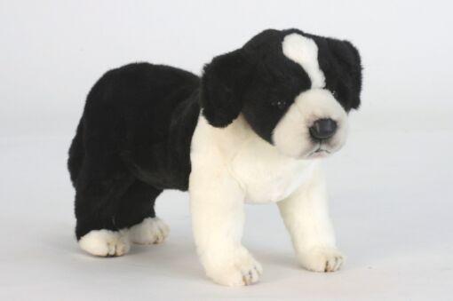 Mooie Zwarte Bordercollie pup staand knuffel  39 cm kopen