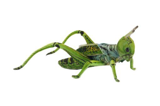 Mooie Fel groene Sprinkhaan groen .W knuffel  35 cm kopen