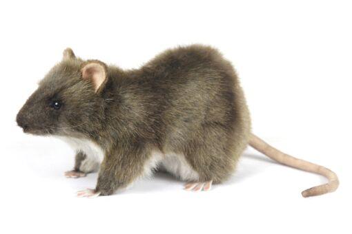 Mooie Witte Rat knuffel  19 cm kopen