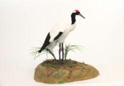 Mooie Witte Japanse kraanvogel  h=42 decoratie  48 cm kopen