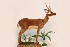 Mooie XL Roodbruine Impala decoratie  90 cm kopen