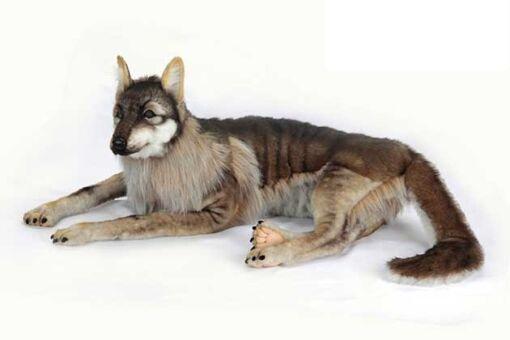 Mooie XL Witte Wolf liggend decoratie  125 cm kopen