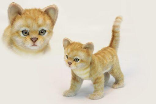 Mooie Goudgele Kitten staand rood  30 cm kopen