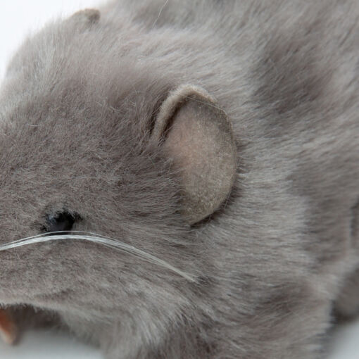 Mooie Grijze Dikke rat grijs knuffel  12 cm kopen