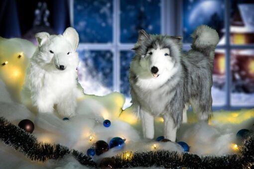 Mooie Poolvos en Husky inclusief kerstsneeuw, kerstballen, besneeuwde kerstslinger en kerstverlichting.202106 kopen